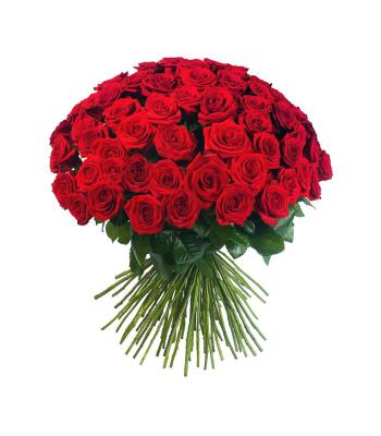 Uhke punane roosikimp