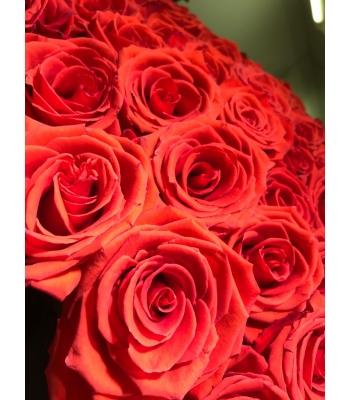 punased roosid