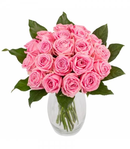 Roosa roosikimp